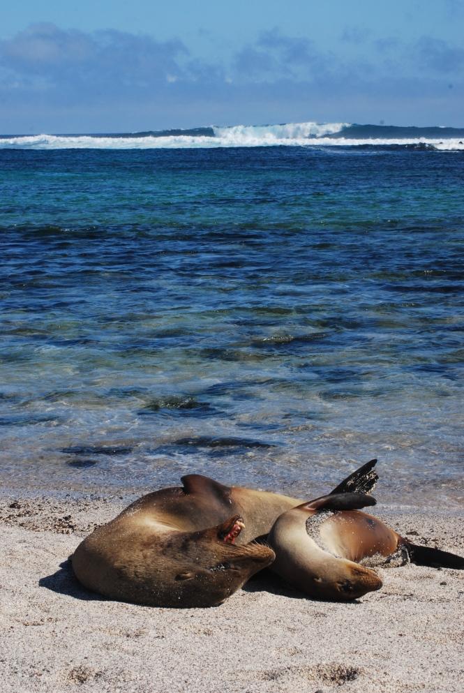 La Lobería, San Cristóbal, Galápagos